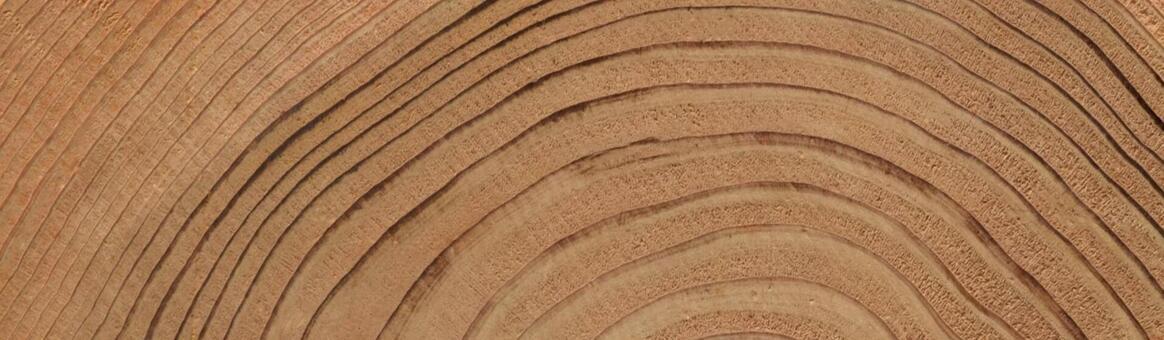 Annual rings, wood grain background, DIY, header material