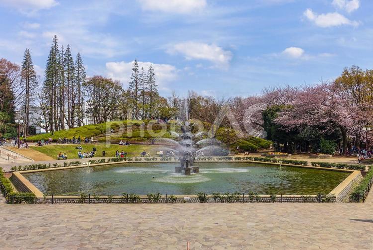 世田谷公園の噴水広場の写真
