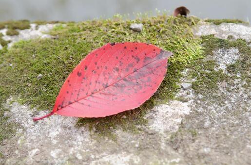 Dead leaves 2