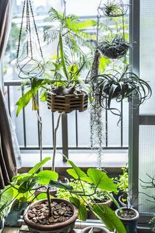 식물이 많은 창가