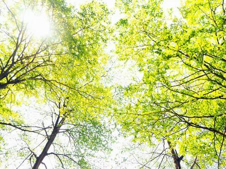 Fresh green and the sun
