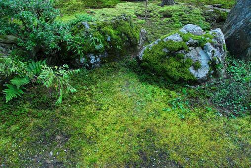苔蘚附著在岩石上
