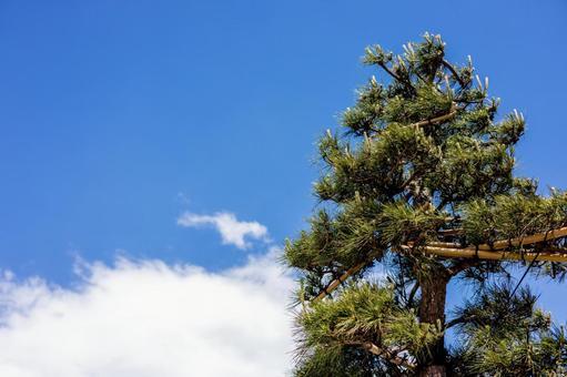 푸른 하늘과 구름과 소나무
