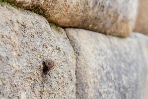 바위 달팽이