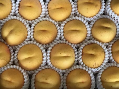 Golden Peach
