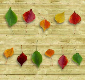 Colorful leaves and board fence Colorful fallen leaves and board wall frame Shiraki board fence Background background Decorative ruled texture Label card Autumn (with cutout path)