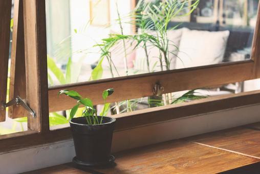 Green windowsill