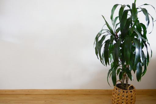 흰 벽과 관엽 식물 3