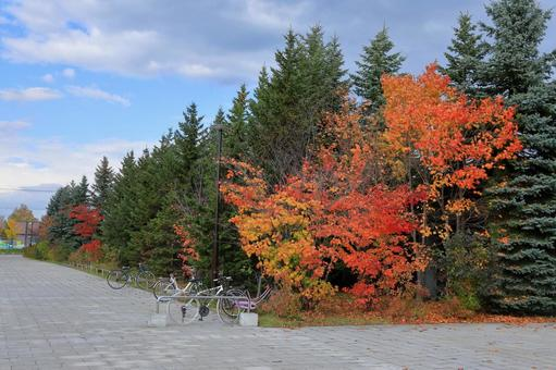 Downstream Park Autumnal trees