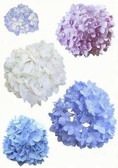 Cut out material hydrangea set