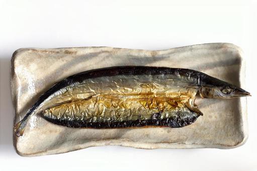Pacific saury fish