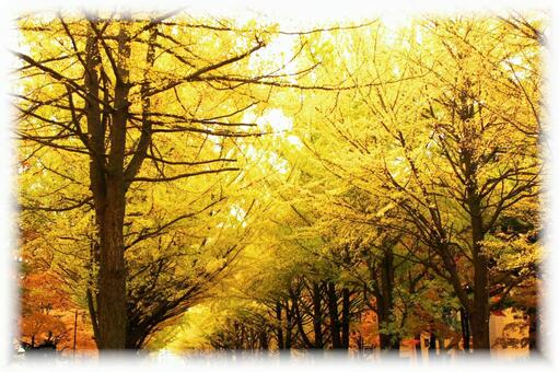 Late autumn Ginkgo biloba trees