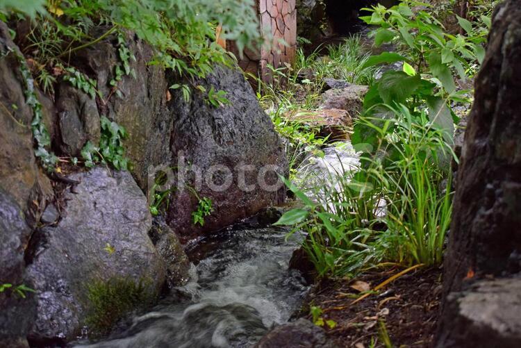清水の写真