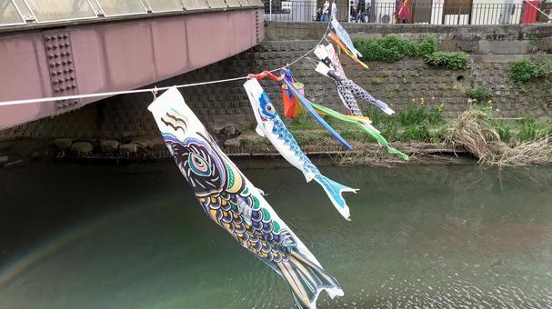 요코하마 : 弘明寺 잉어