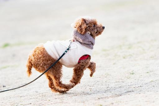 A dog walking in the park on a sunny day