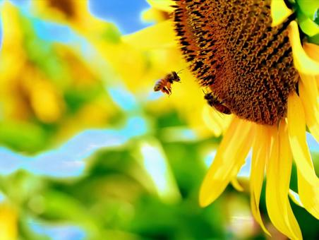 Japanese summer sunflower landscape 04