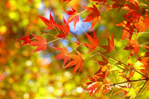 Momiji dyed red