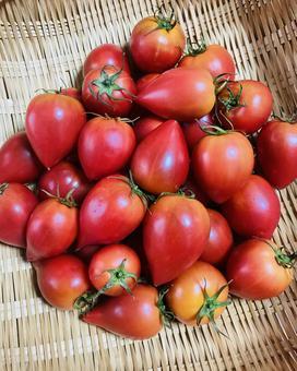Fruit tomato (8)