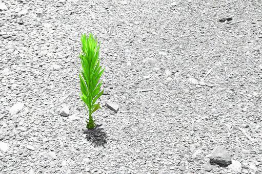 Summer grass of dry ground # 5