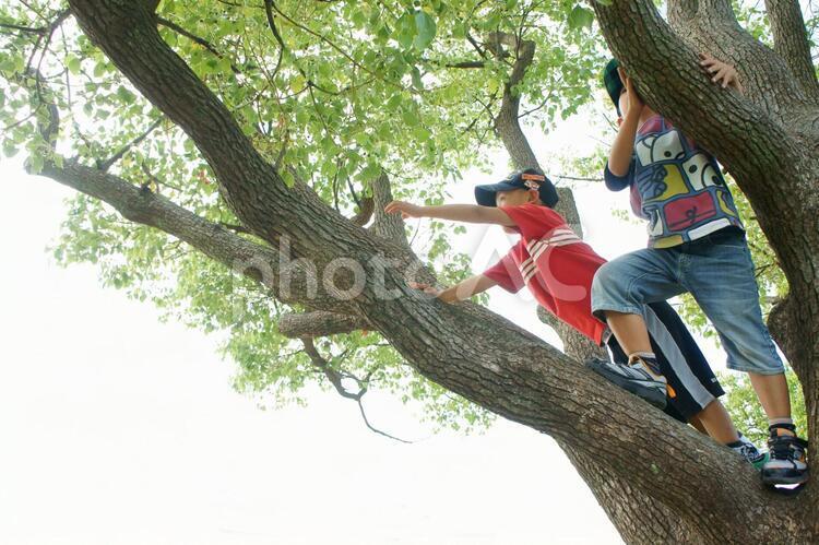木登りの写真