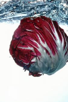Underwater cabbage 1