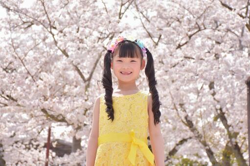 櫻花和女孩