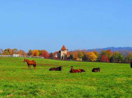 Thoroughbred ranch and horses in Hokkaido