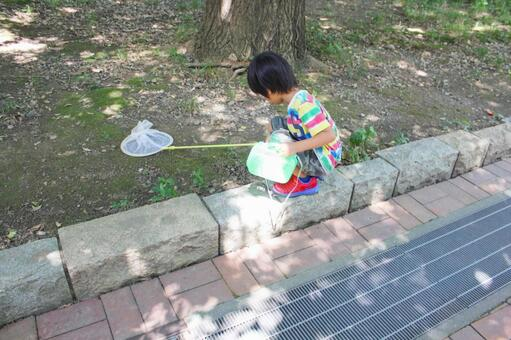 Children who trap insects