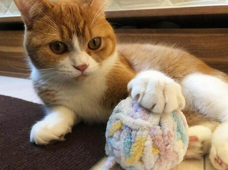Cat 003 playing with a ball of yarn