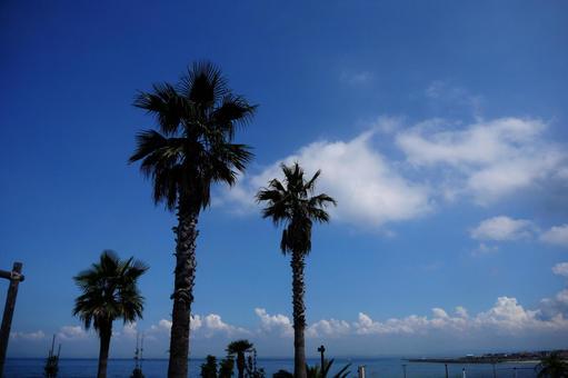 椰子の木のある海
