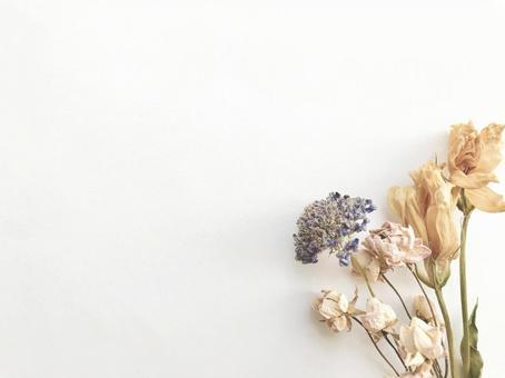 Dried flower 8