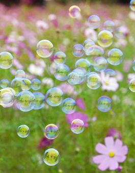 Soap bubbles and cosmos fields
