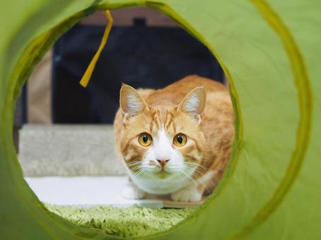 Cat playing in the tunnel