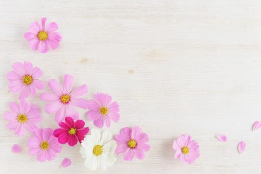 Pink and white cosmos wood grain frame