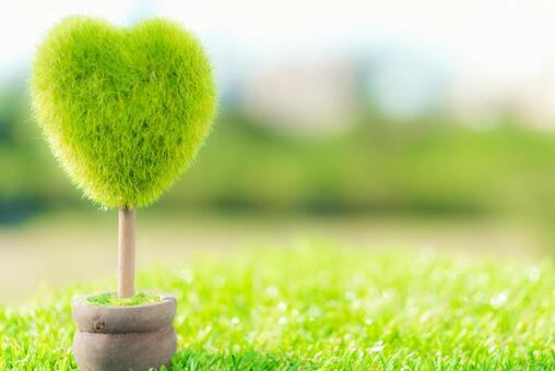Heart-shaped plants
