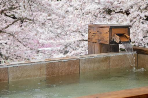 Open-air bath in the cherry blossoms
