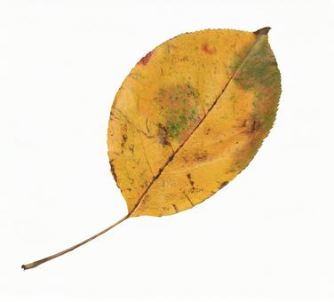 Cropped material stock fallen leaves 01