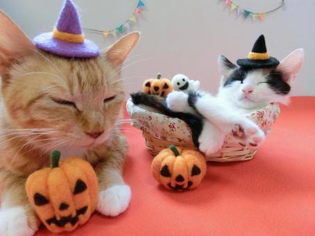 万圣节小猫15