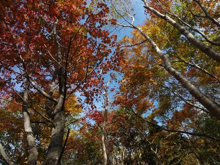 Autumn leaves Nasu dake Asahi descent Blue sky Autumn leaves hunting Autumn mountain