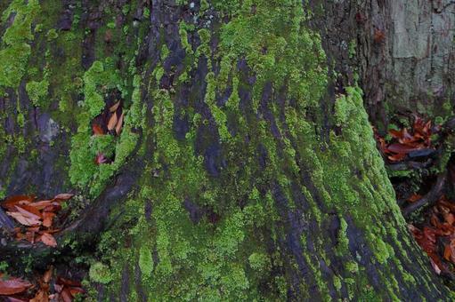 苔蘚和木頭的好朋友