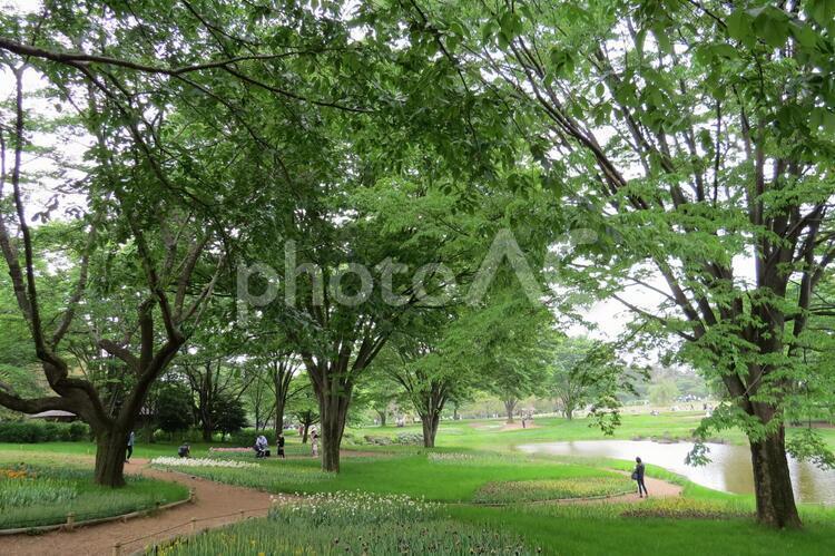 昭和記念公園-01の写真