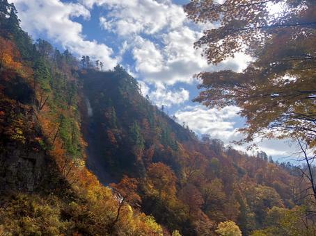 Akita's autumn leaves and sky backlight