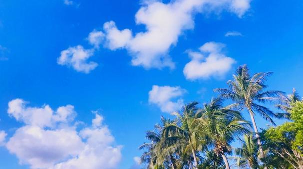 푸른 하늘과 야자수 16 : 9
