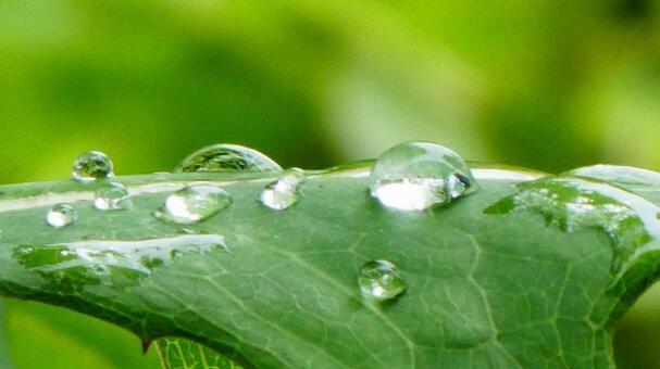 녹색 잎을 타고 물방울