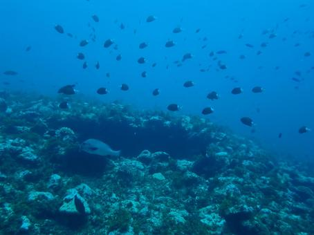 Diving Okinoerabu