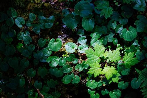 습기가 많은 숲의 식물