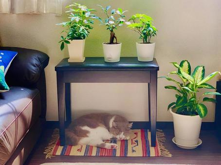 Ornamental plants and cats