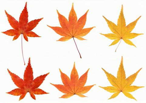 Cut out material Autumn leaves leaf set 2