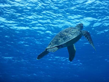 바다 거북 수중 사진 스쿠버 다이빙