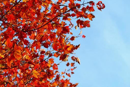 푸른 하늘과 붉은 단풍